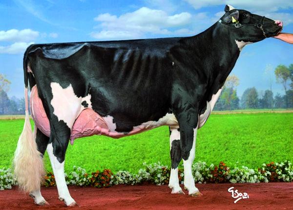 IZ_14_19_campionessa_vacche