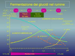Fig 1 - Fermentazione dei glucidi nel rumine