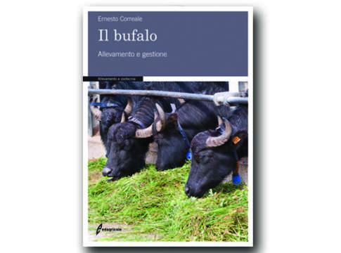 Bufalo