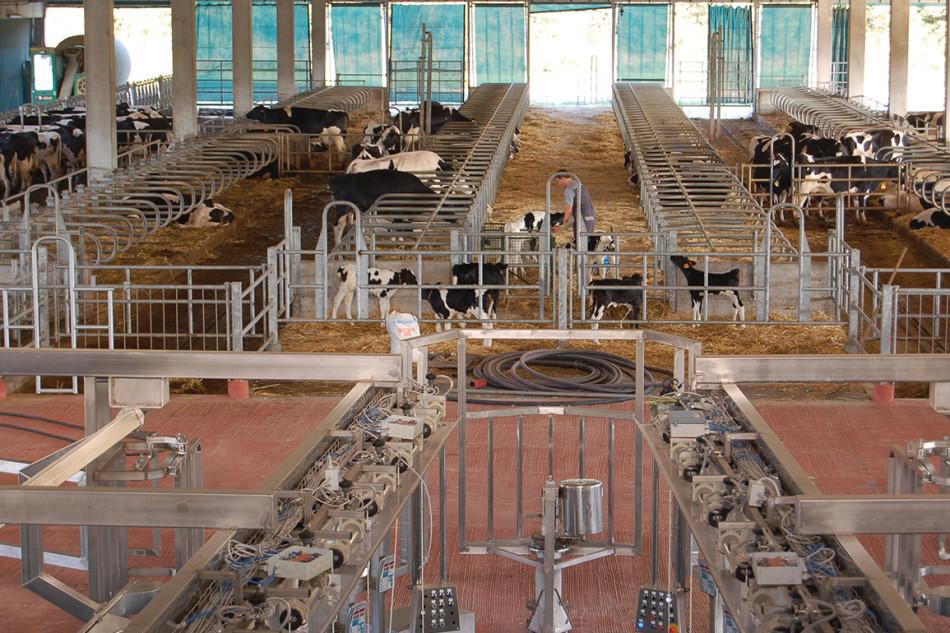 Edilizia-stalle-bovini