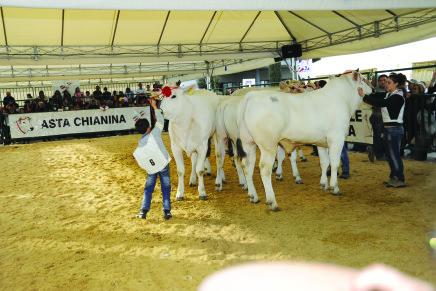 Agriumbria 2016, convegno bovini da carne / LE RELAZIONI