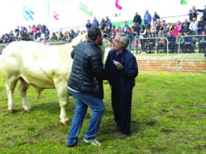 """Abeltino Maddalena, primo classificato Charolaise, durante il ritiro del premio """"Michele Filigheddu"""" consegnato dal sindaco di Ozieri Leonardo Ladu."""