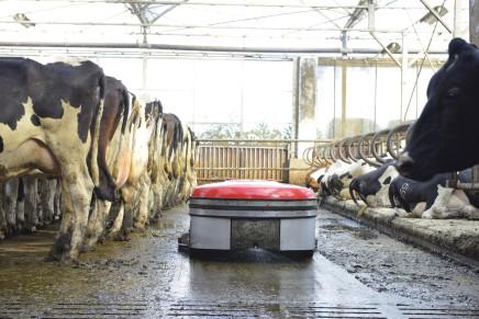 Il robot per la pulizia delle stalle con pavimenti pieni