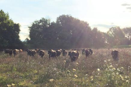 Tre giovani allevatori di bufale: sì alla multifunzionalità