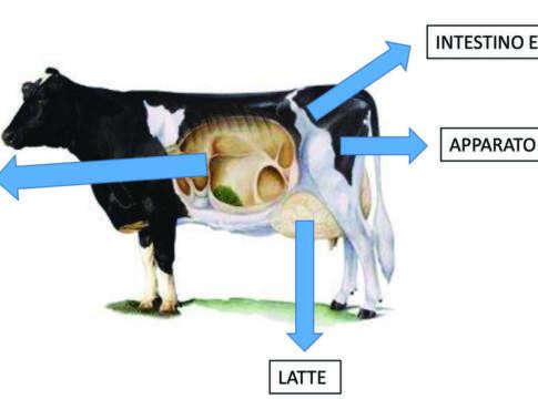 microflora latte