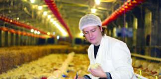 prezzo polli