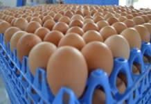 prezzi mercati avicoli