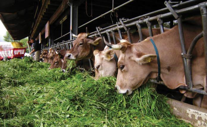 sottoprodotti agroindustriali