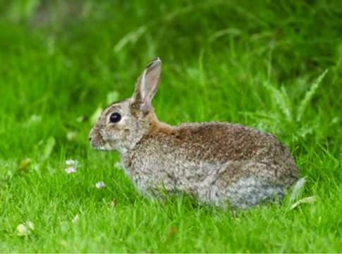 allarme benessere conigli