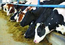 produzione latte