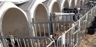 benessere animale