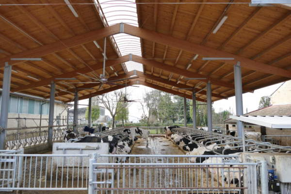 benessere della vacca